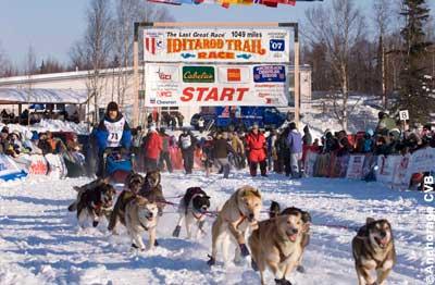 Iditarod Hundeschlittenrennen
