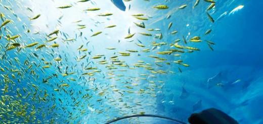 Georgia Aquarium (photo Georgia Dept. of Tourism)