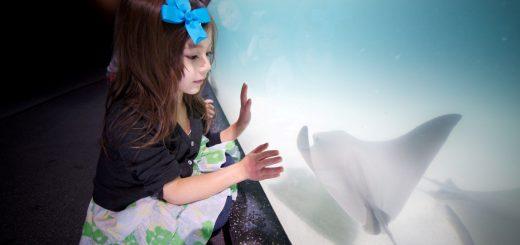 Virginia Aquarium (Quelle: Claasen GmbH, VisitVirginiaBeach.de)