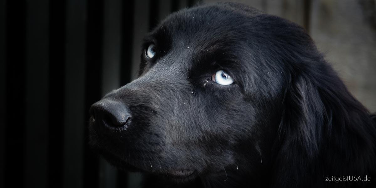Hund mitnehmen in die USA