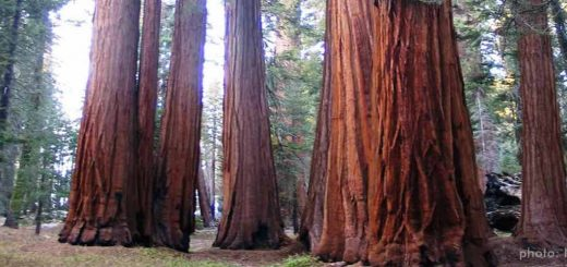 Sequoia Nationalpark, Kalifornien