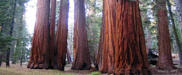 Sequoia and Kings Canyon Nationalpark, Sierra Nevada, Kalifornien