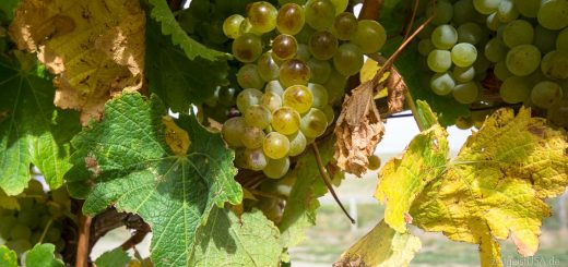 Weinparadies Kalifornien -- Napa, Sonoma und mehr