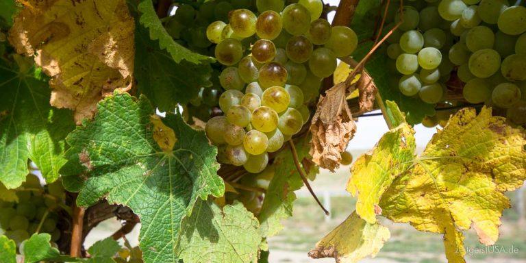 Weinparadies Kalifornien — Napa, Sonoma und viel mehr