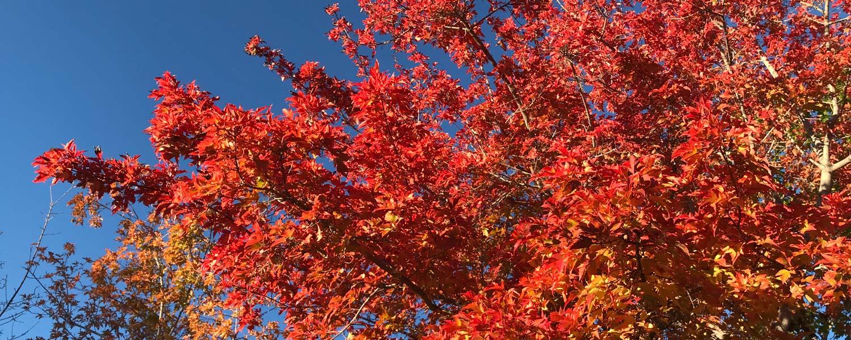 Herbstblätter -- Indian Summer