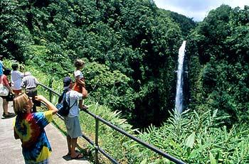 Die Akaka Falls befinden Sich mitten ca. 20 Meilen nördlich von Hilo, Hawaii (Big Island Visitors Bureau)