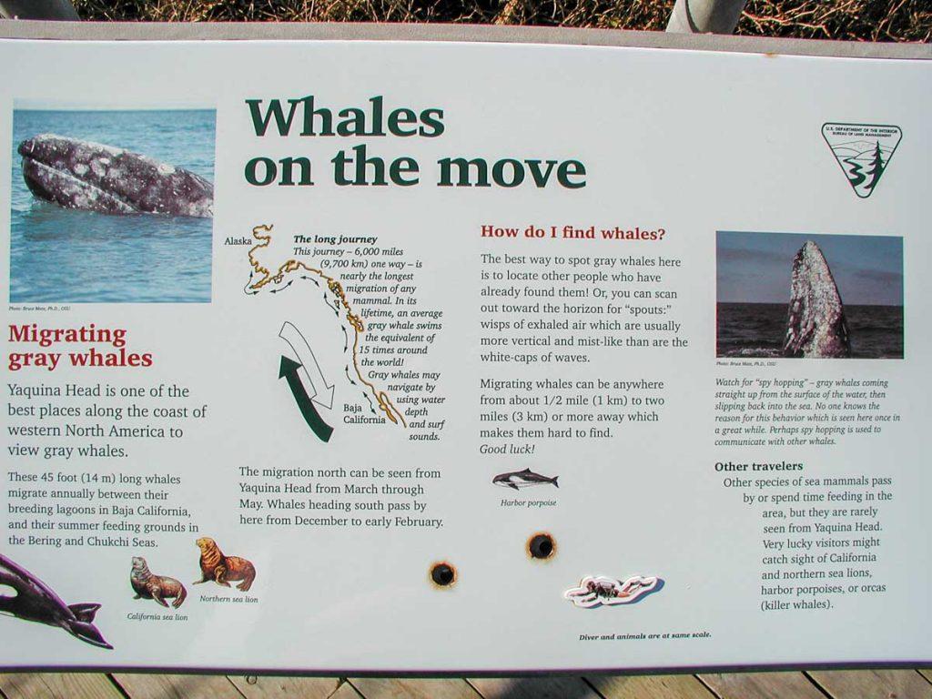 Walbeobachtung an der Küste von Oregon, hier: ein Hinweisschild bei Newport, Orgeon