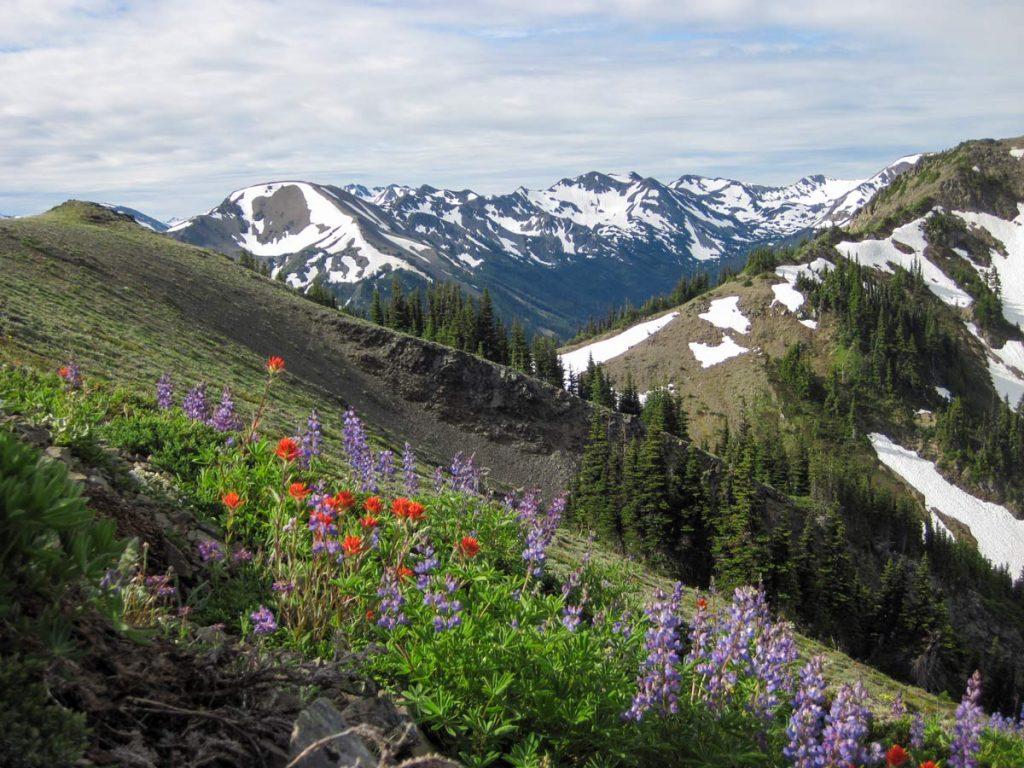 Wildblumen in der Gebirgsregion im Olympic Nationalpark, Washington, USA (photo: NPS)