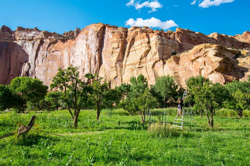 Fruita Orchard, Capitol Reef NP (photo: NPS/Jacob Frank)