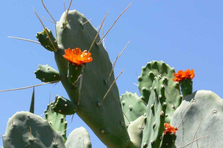 Anza-Borrego Desert State Park, Kalifornien