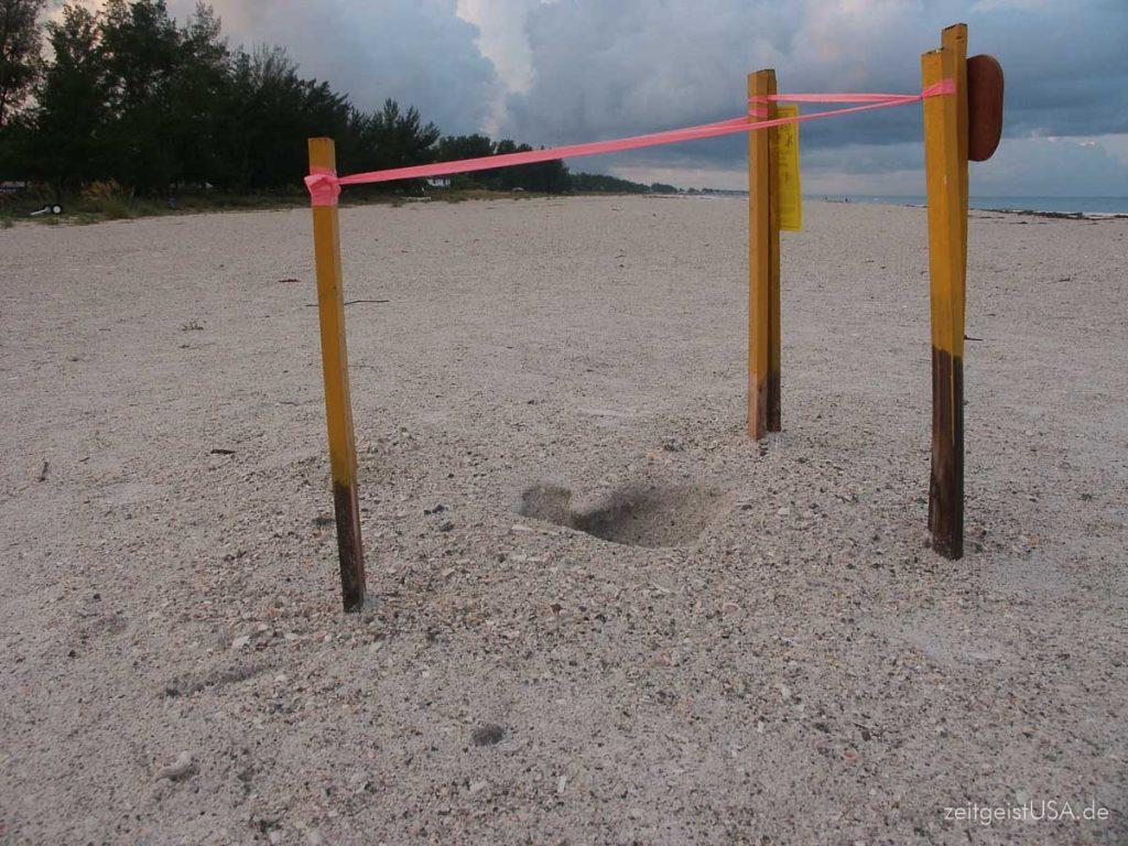 Sea Turtle Nest -- abgesperrt bis zum Schlüpfen